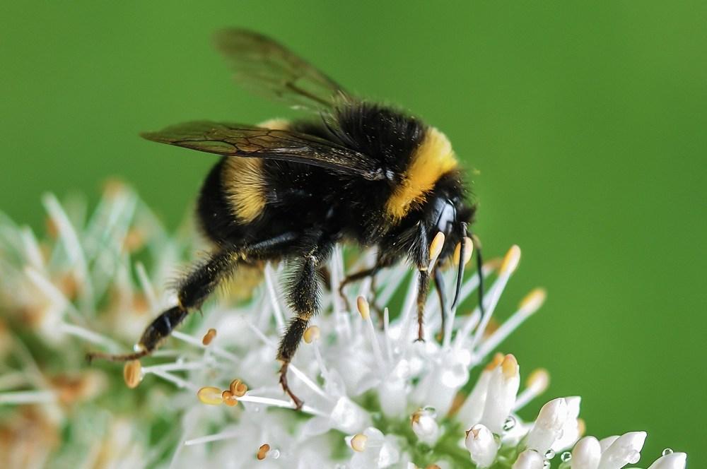 Qué hacer en caso de picadura de avispa o abeja
